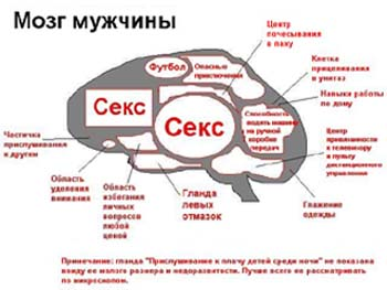 мозг, кризис, кризисные периоды